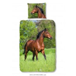 Muller Paard