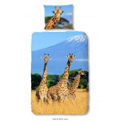Muller  Giraffe